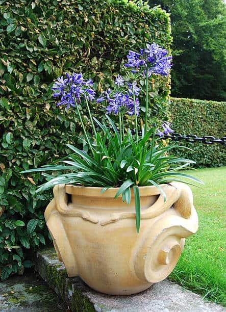 jardim com vaso grande de agapanto