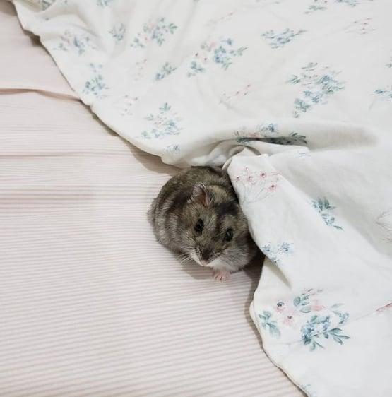 perfil de hamster para seguir no Instagram