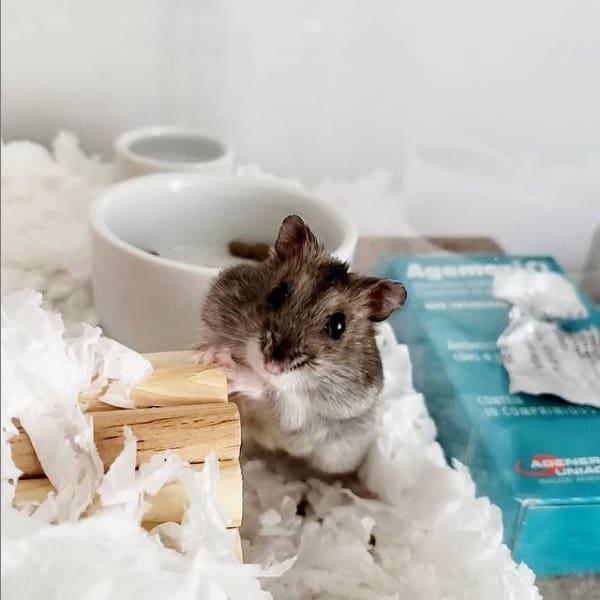 pagina de hamster para seguir