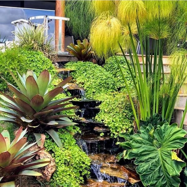 jardim externo com cascata e plantas naturais