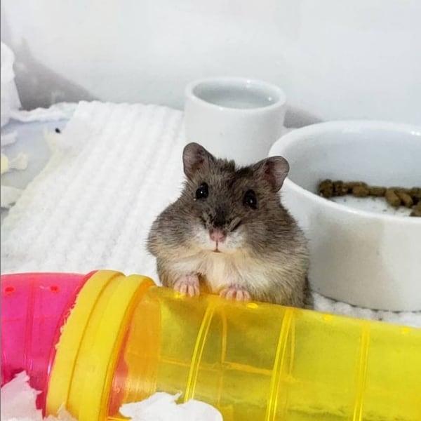 Instagram de hamster