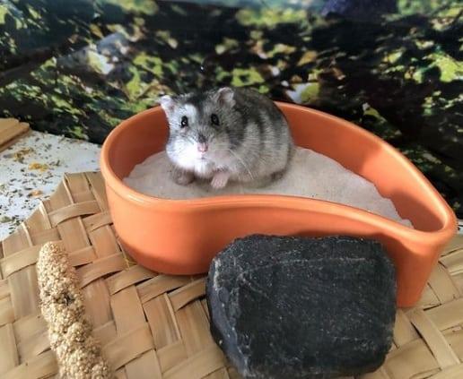 perfil de hamster no instagram