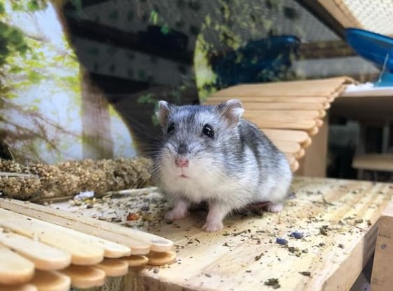 foto de hamster no instagram