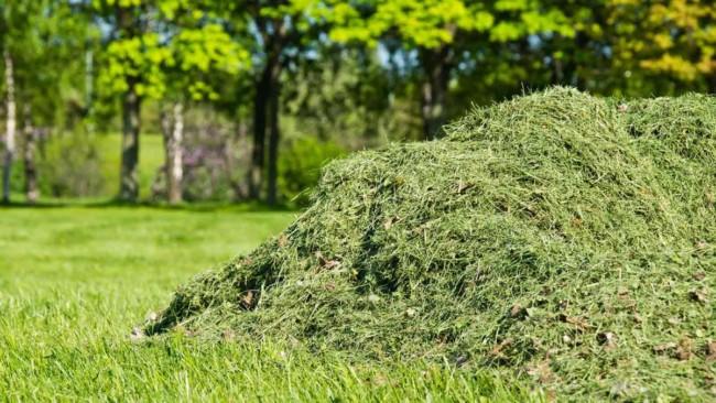 adubo organico de grama