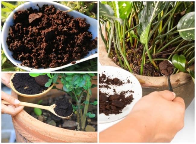 adubo organico de borra de cafe
