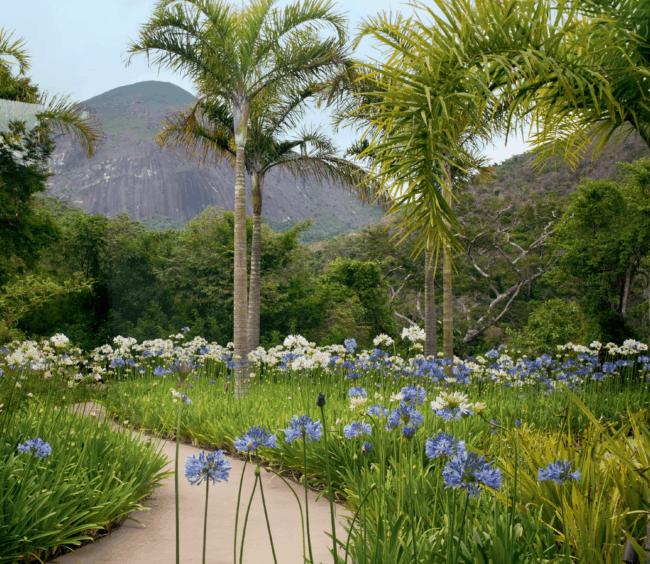 jardim decorado com agapantos em diferentes cores