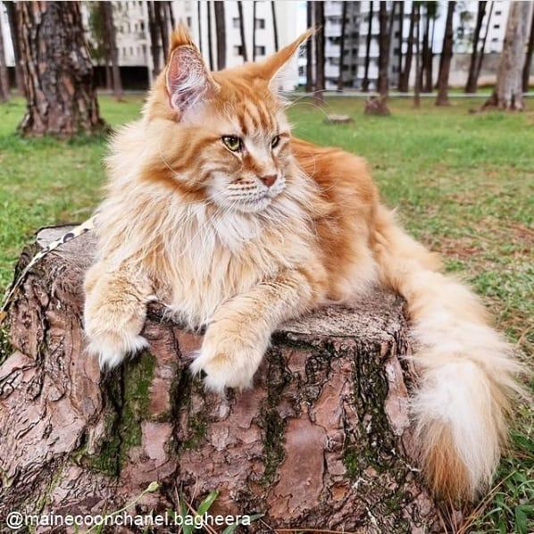 perfil de gato para seguir no instagram