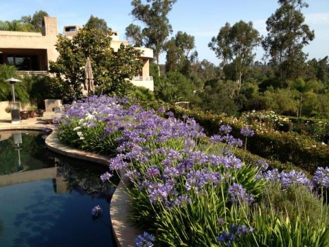 jardim grande com agapantos
