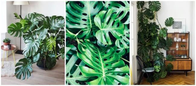 planta tropical para urban jungle