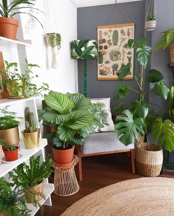 sala decorada com plantas e elementos naturais