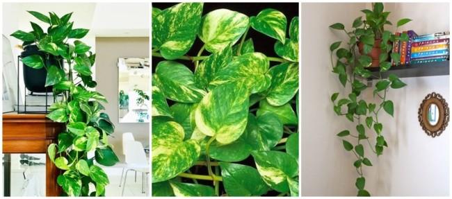 planta de vaso para urban jungle
