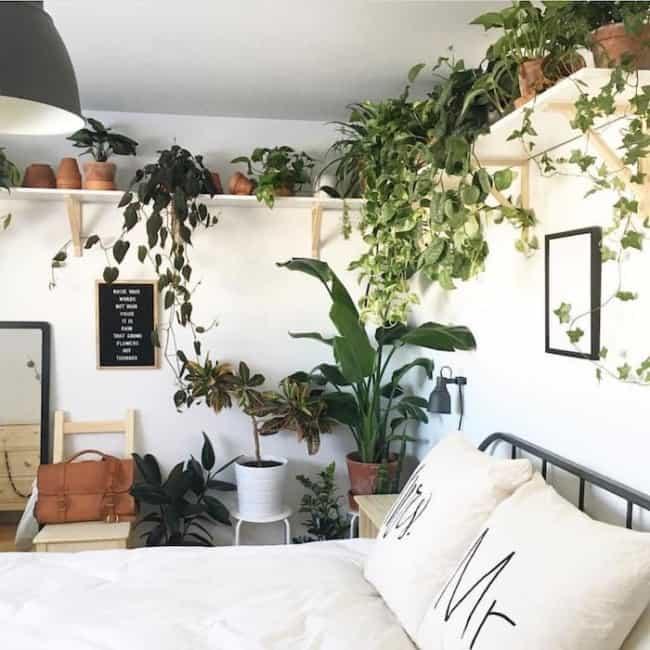 quarto com prateleiras de plantas