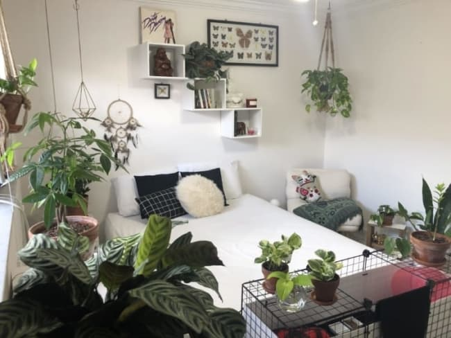 plantas na decoracao do quarto