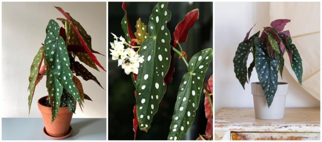 tipo de planta para urban jungle