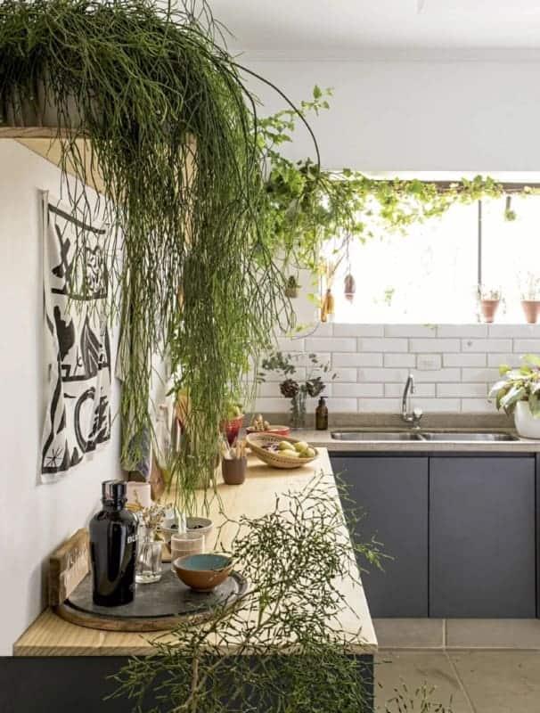 cozinha decorada com plantas