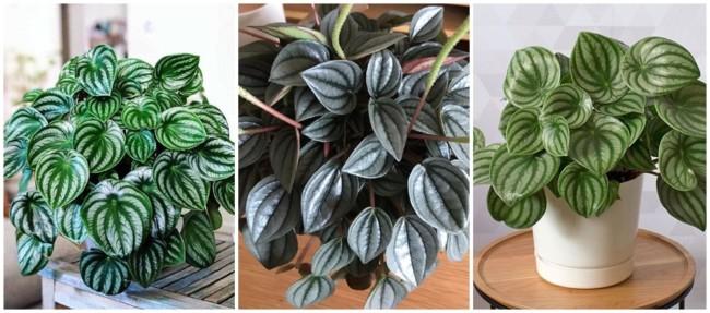 especie de planta para urban jungle