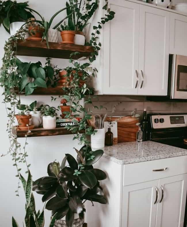 cozinha com prateleiras de plantas