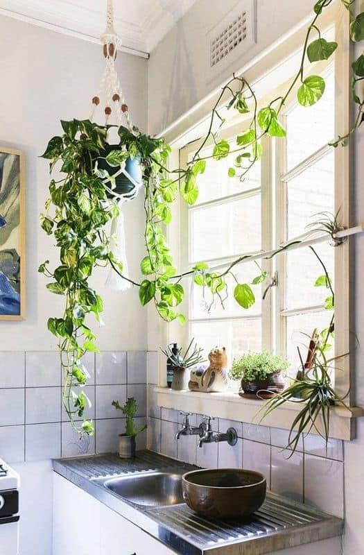 cozinha simples com plantas pendentes