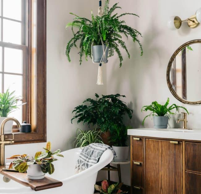 banheiro urban jungle com banheira