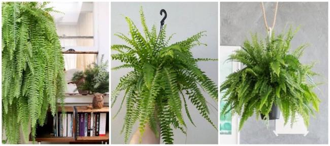 planta pendente para urban jungle