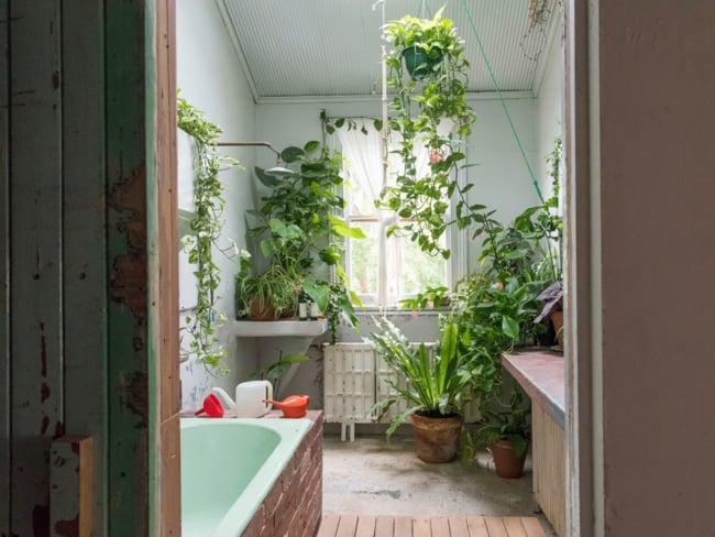 banheiro antigo decorado com plantas