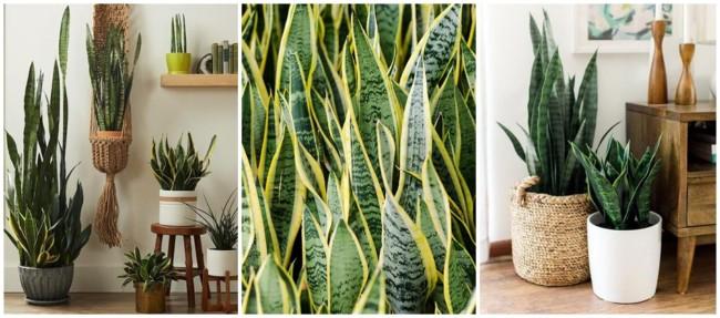 planta facil de cuidar para urban jungle