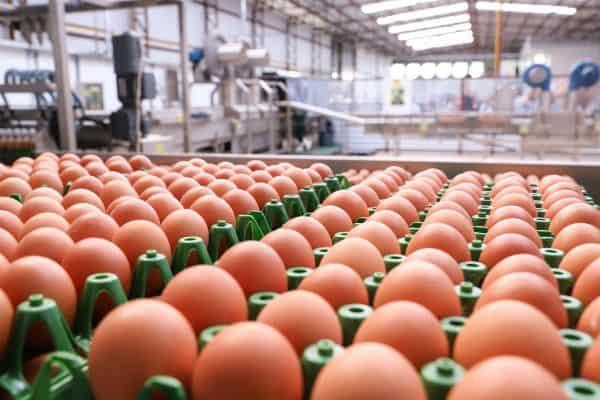 dicas para montar distribuidora de ovos