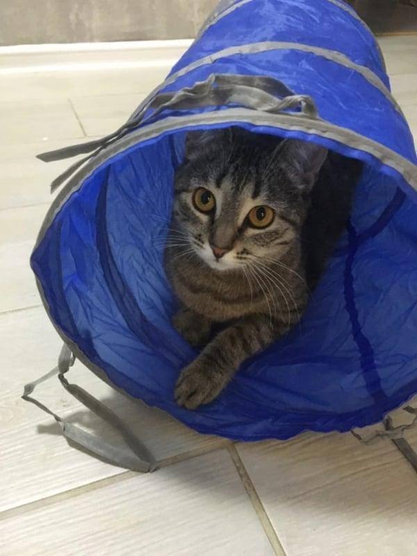 tunel dobravel para gatos