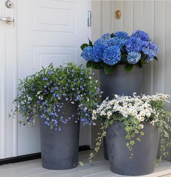 varanda com hortensia em vaso