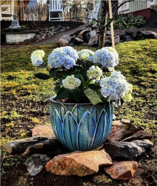 jardim com hortensia em vaso