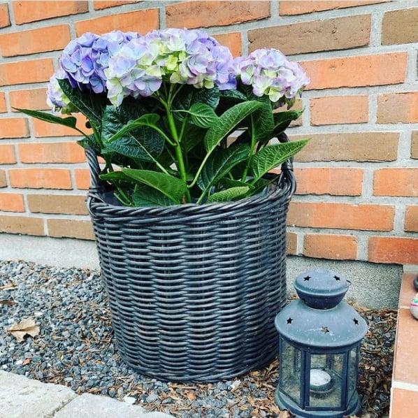 decoracao externa com hortensia em vaso
