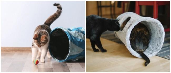 modelos simples de tunel para gato