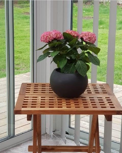 hortensia cor de rosa em vaso