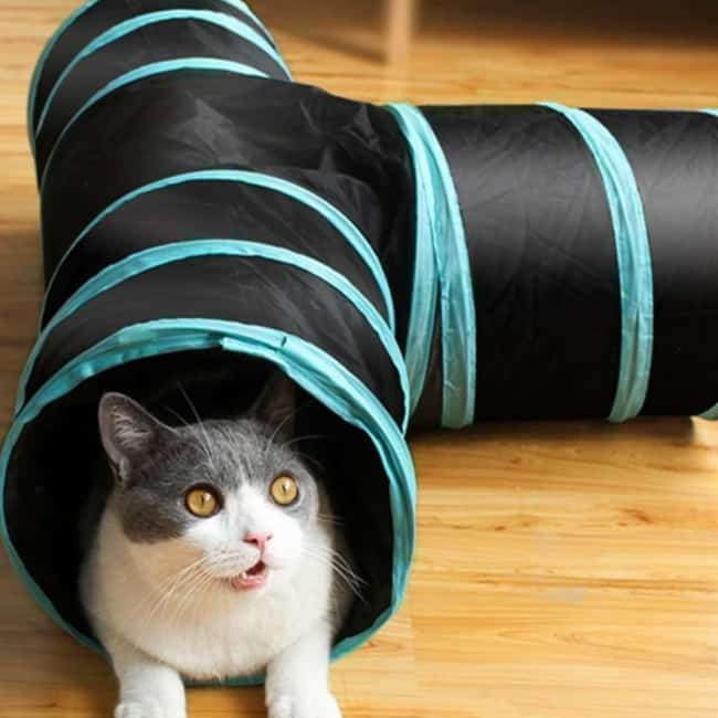 tunel com vias para gato
