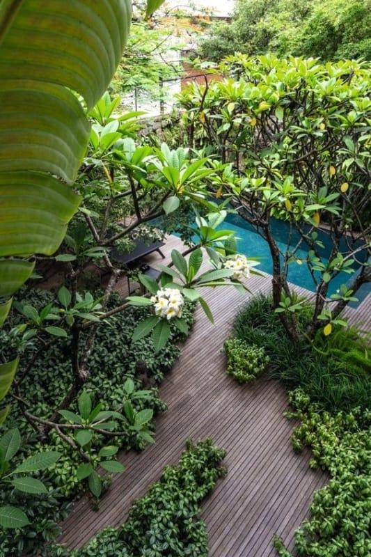 jardim tropical com arvore de jasmim manga