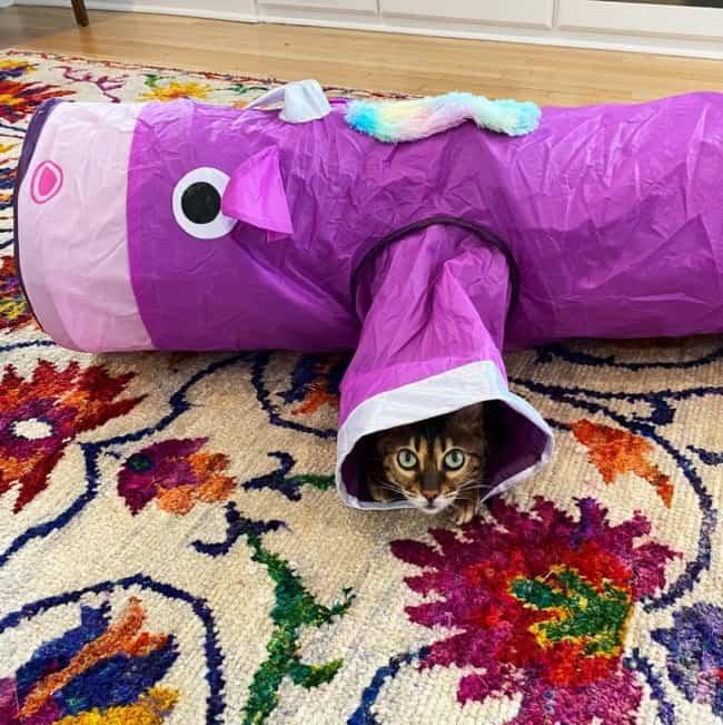 brinquedo de tunel para gatos