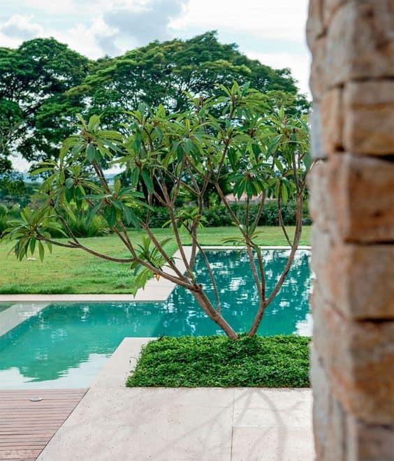 jardim com piscina e jasmim manga