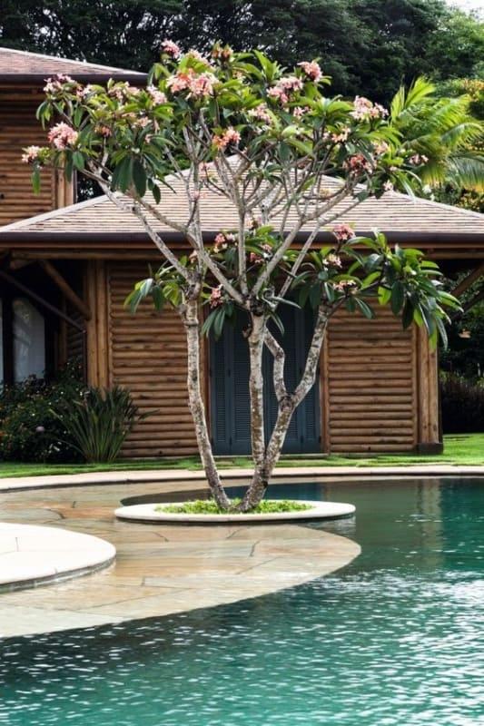 area da piscina com arvore de jasmim manga
