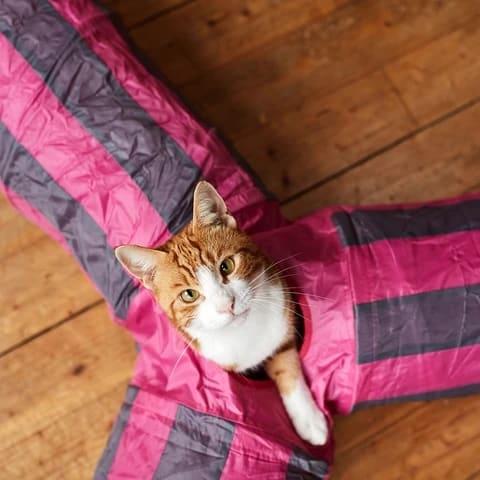 tunel de gato com saidas