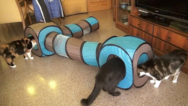 tunel grande para gatos