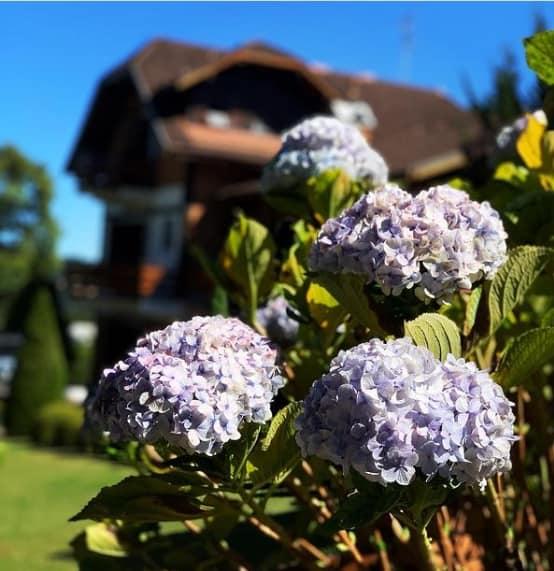 jardim de casa com hortensias