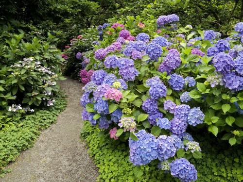 jardim rustico com hortensias