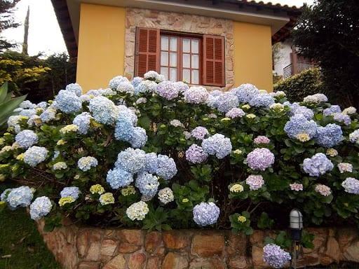 fachada de casa com hortensias no jardim