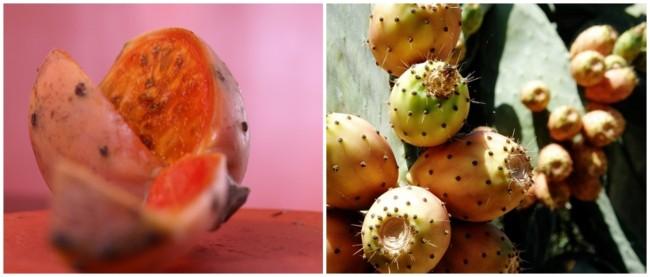 beneficos do figo da india para a saude