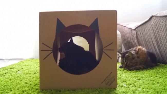 tunel simples de papelao para gato