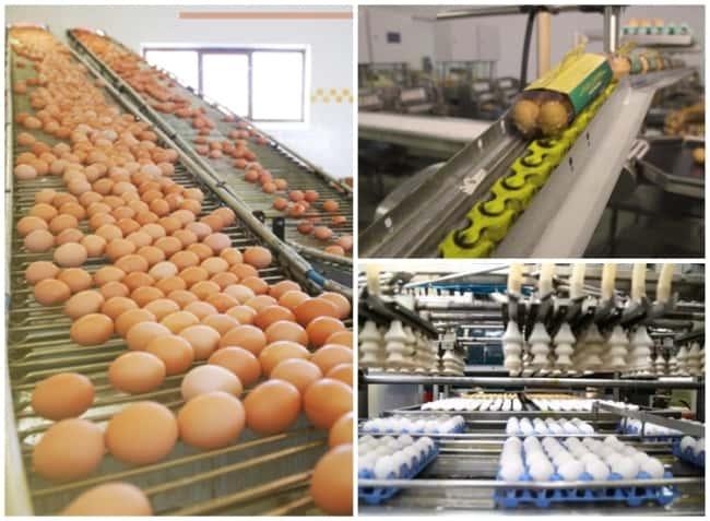 investimento para montar distribuidora de ovos