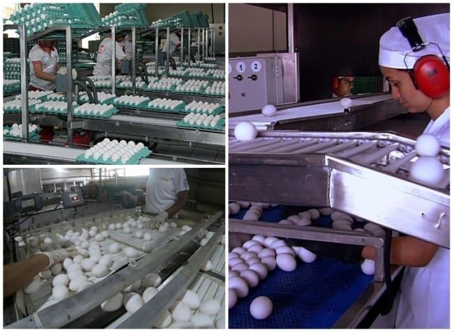 como montar distribuidora de ovos