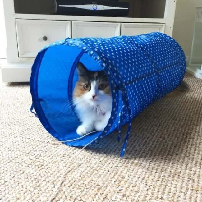 tunel reto e simples para gato