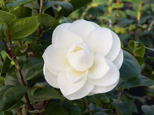 flor delicada branca