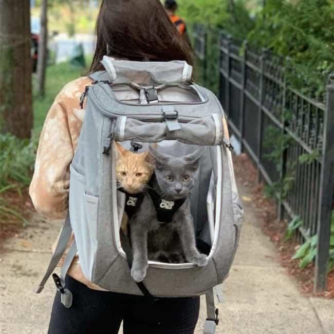 E possivel carregar dois gatos dependendo do caso